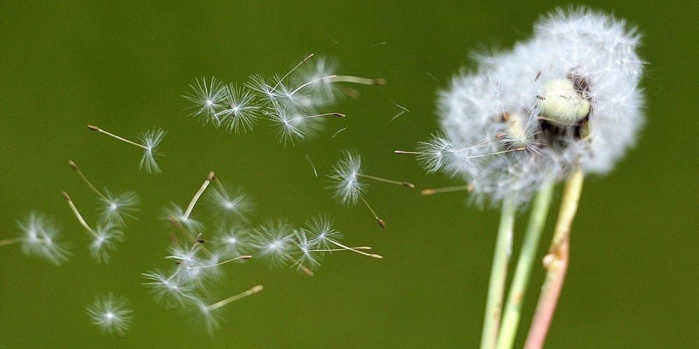 Allergies & solutions au naturel